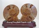 Cặp vỏ ốc hóa thạch K086