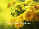 Hoa mận và cúc vàng tượng trưng cho một cuộc sống thuận lợi