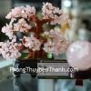 Cây tài lộc thạch anh hồng KC027