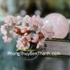 Cây tài lộc thạch anh hồng siêu nhỏ KC060