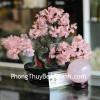 Cây tài lộc gốc đẹp thạch anh hồng size vừa KC085