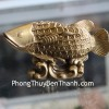 Cá kim long vảy đồng tiền D165