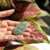 Phật bản mệnh Phỉ Thúy xanh đậm sắc sảo A+ lớn, tuổi Mùi, Thân S6864-6