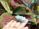 Mặt tỳ hưu phỉ thúy xanh ngọc S6639