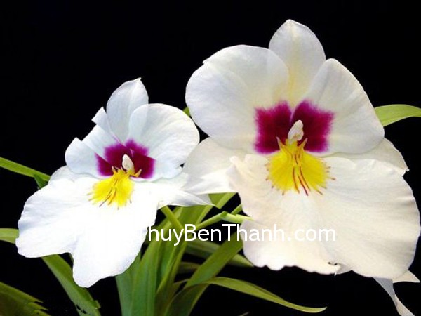 hoa tuoi Hoa và những may mắn trong tình yêu