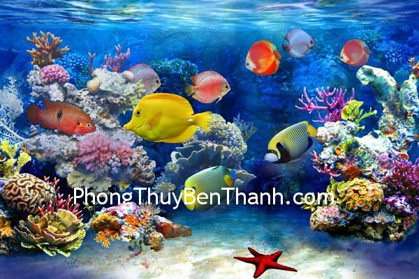 dan ca Các loại cá có màu sắc rực rỡ đều tốt về phong thủy