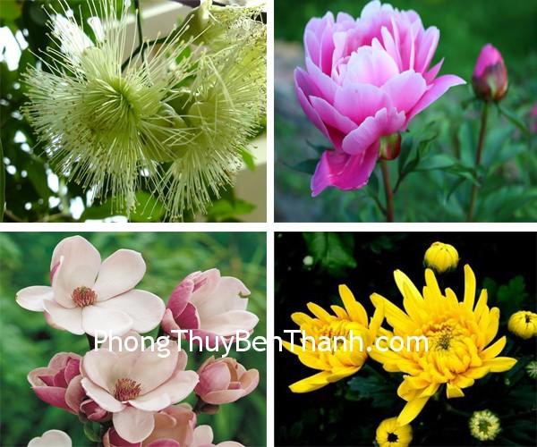 hoa bon mua Hoa bốn mùa cho may mắn quanh năm