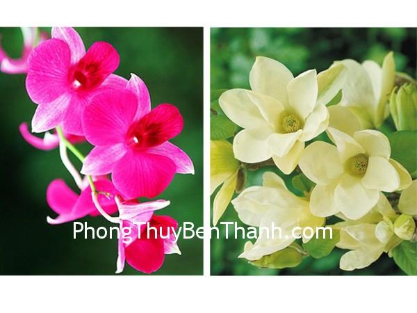 hoa hoa Hoa lan tượng trưng cho sự toàn mỹ. Mộc lan tượng trưng cho vẻ đẹp mềm mại, nữ tính